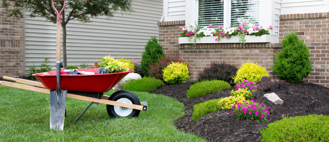 August 2018 Insight: Great Lawn resource header