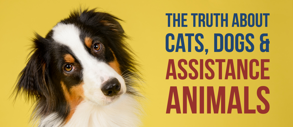 November 2019 Insight: Assistance Animals Resources Header
