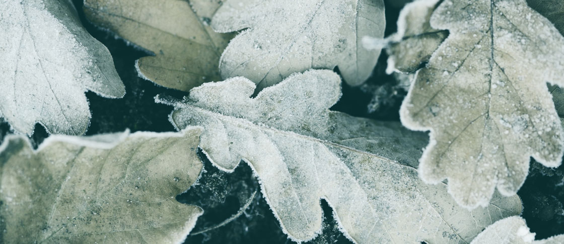 Preserving Plants in Winter image