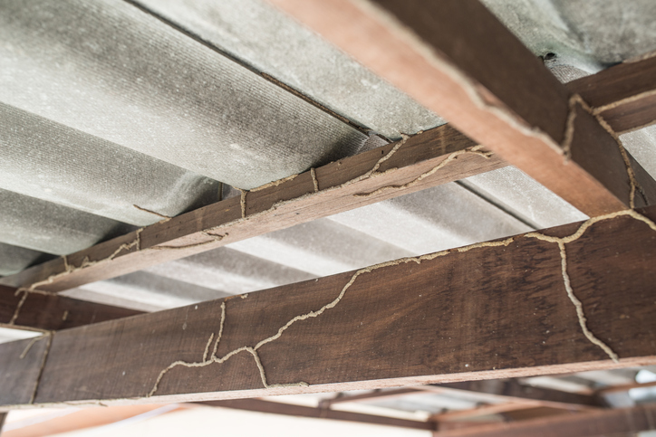 Picture of a roof that was destroyed by termites